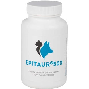 Brain & Epilepsy