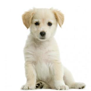 Dog Medication - Cheaper Medication for Dogs - Dog Meds & Supplements